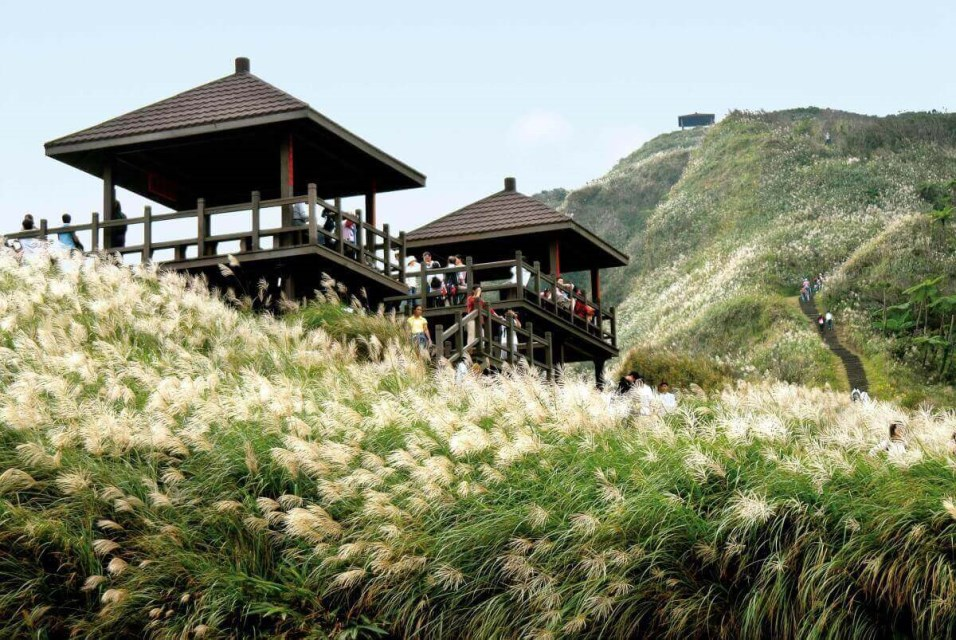 Caoling Historic Trail: The Season of Silver Grass